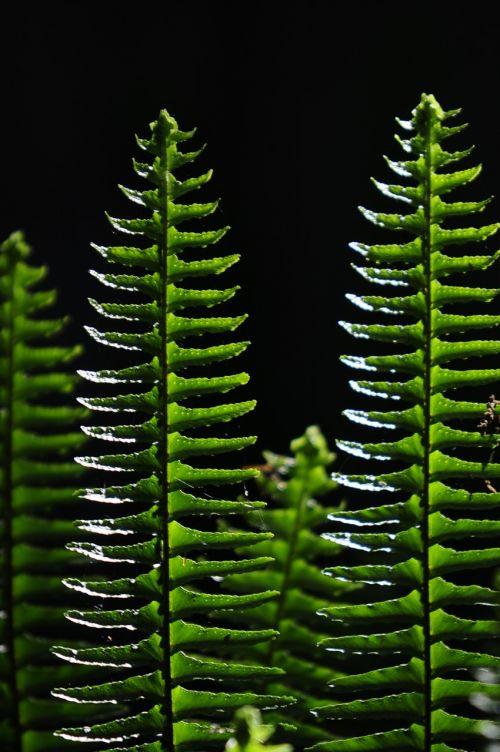 ferns green vertical