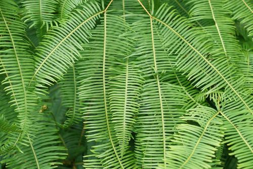 ferns wild tropical jungle
