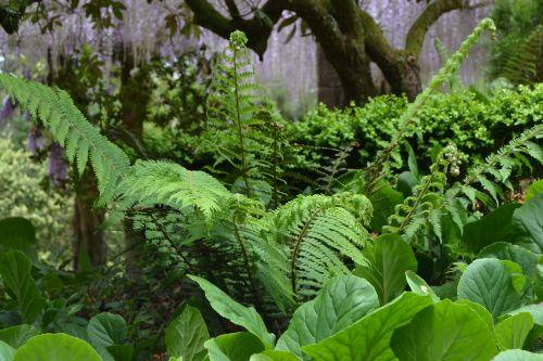 ferns forest buçaco