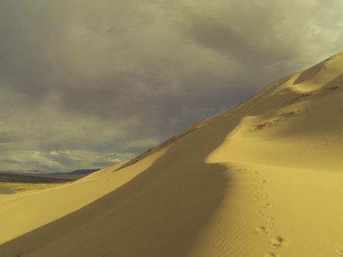 ferns desert suburbs