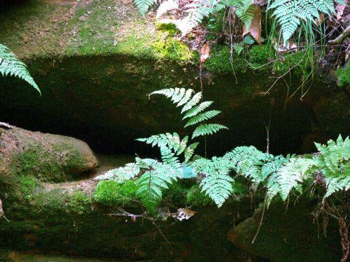 Ferns In Rocky Shadows