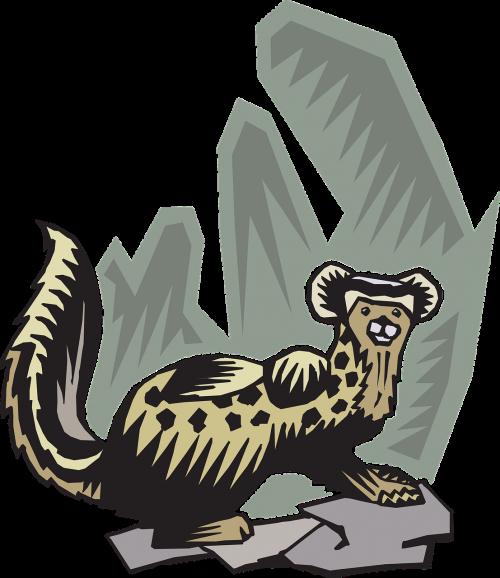 ferret animal pet