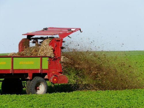fertilize crap field