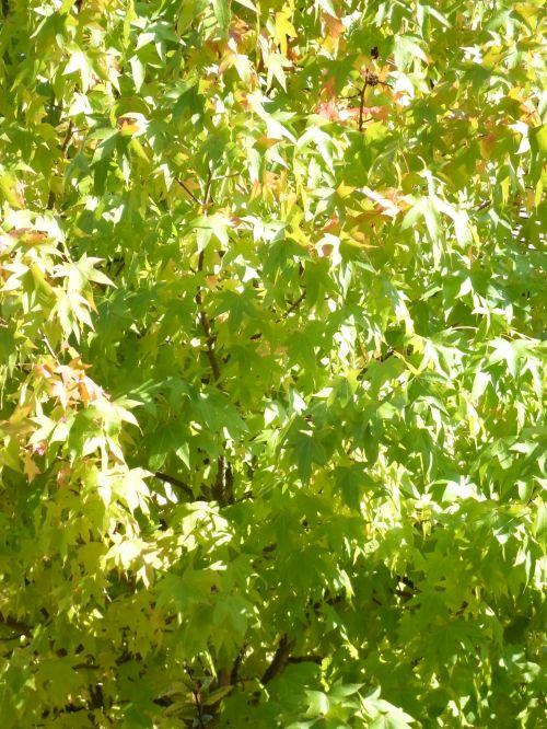 Foliage Plants & 204