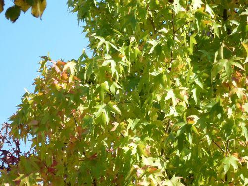 Blue Sky Vegetation Foliage