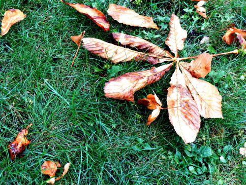 Dead Leaf # 2
