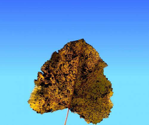 Dead Leaf # 4