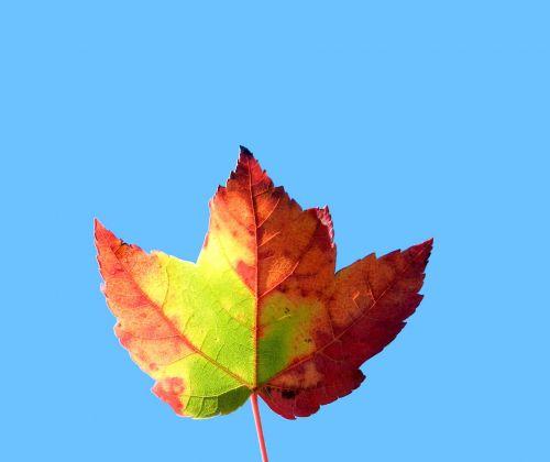 Dead Leaf # 5