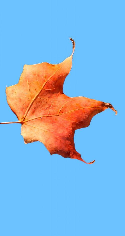 Dead Leaf # 6