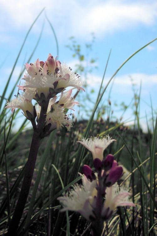 fever dress flowers stamens