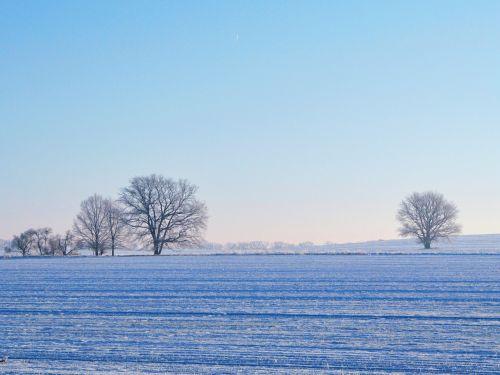 field trees winter