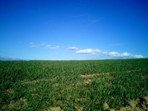 field landscape la rioja