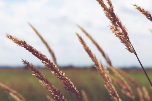 field wide plant