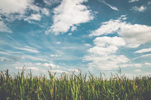 field corn air