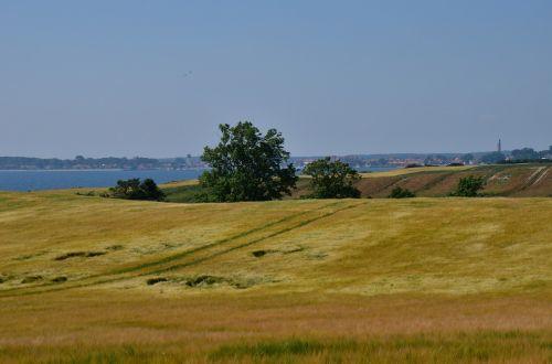 field golden wheat coast
