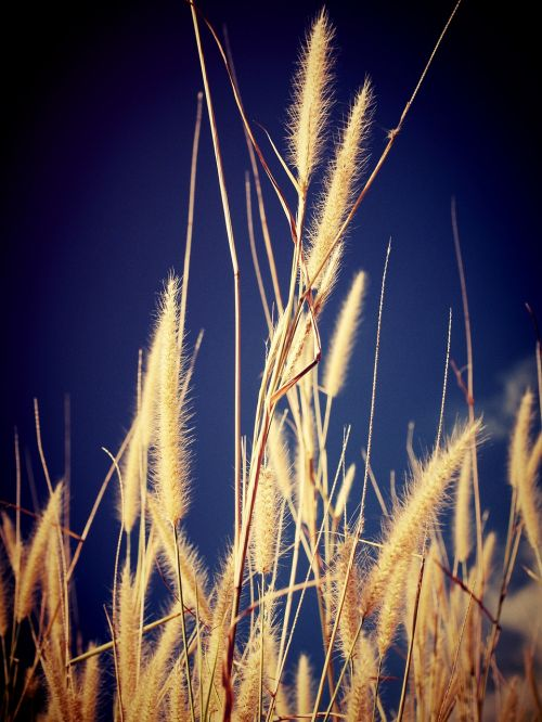 field filter flora