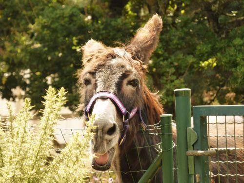 field pre donkeys