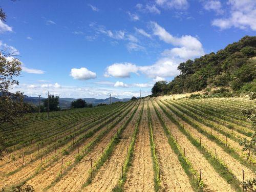 field wine france