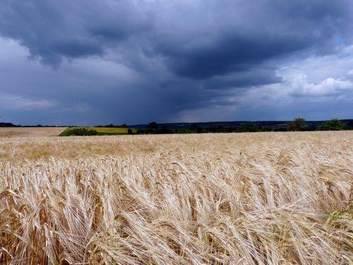 field landscape dark clouds