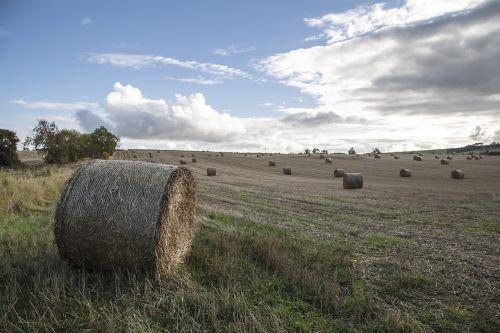 field uk scotland