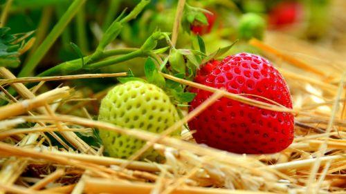 field fruit fruits