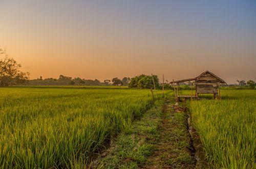field farmer green