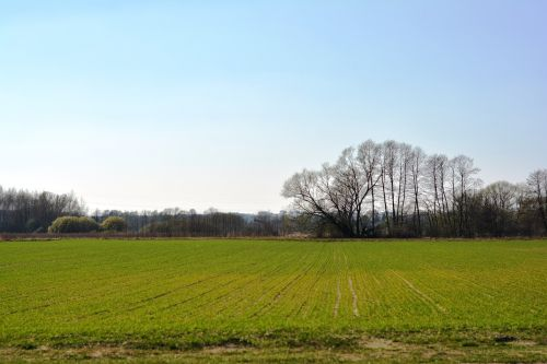 field crops sow