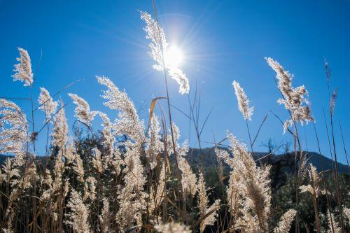 field backlight sun
