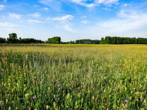 field meadow nature