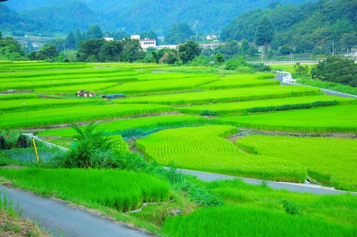 field yamada's rice fields rice terraces