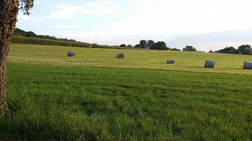 field haystacks june