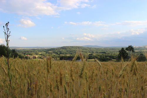 field corn village