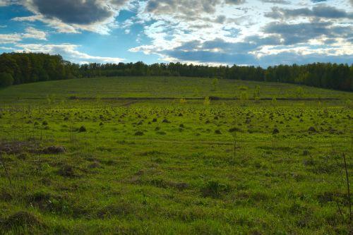 field hill mole