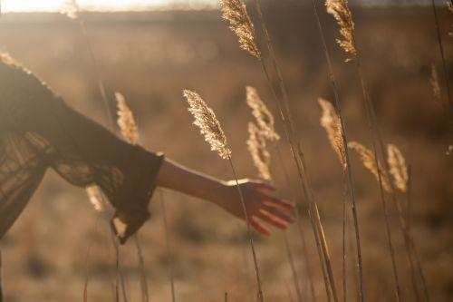 field grass yield