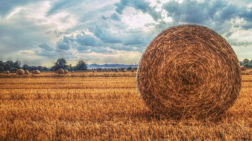 field heaven landscape