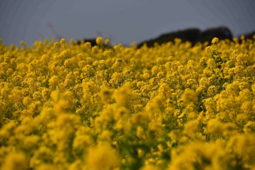 field the agricultural commercial companies flowers