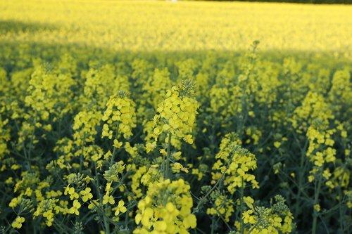 field  farm  harvest