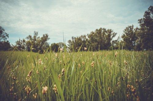 field  glade  grass