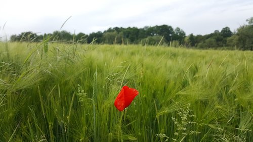 field  lawn  prairie