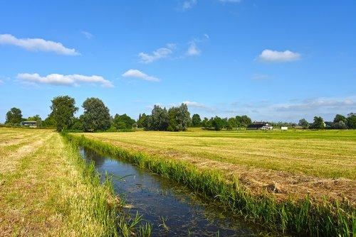 field  grass  water