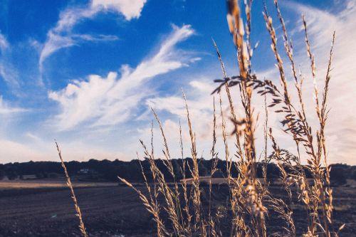 field herbage pasture