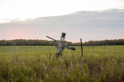 field  scarecrow  seasonal