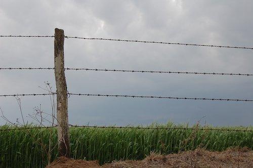 field  wiring  planting