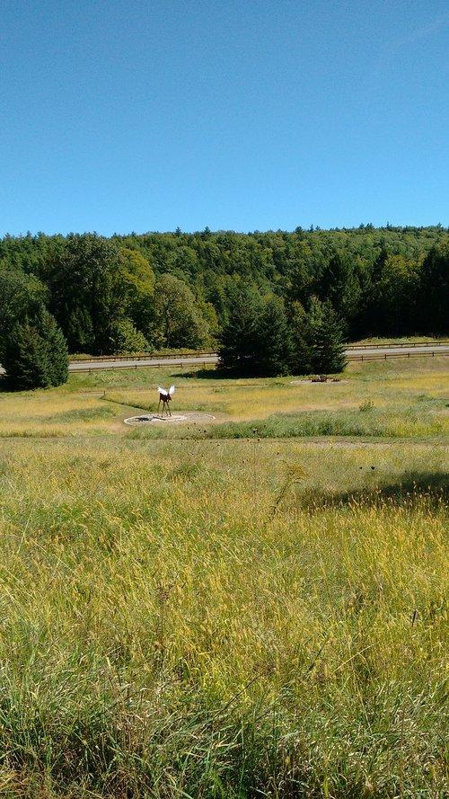 field  sky  moose