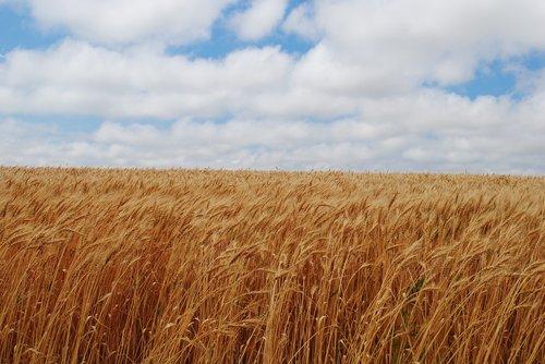 field  fall  harvest