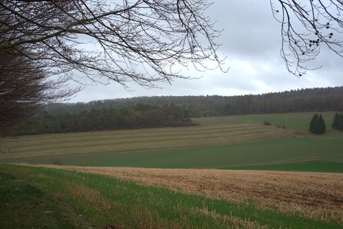 field  elbe mountain  edge of the woods