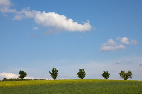 field  clouds  trees