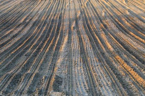 field  traces  soil