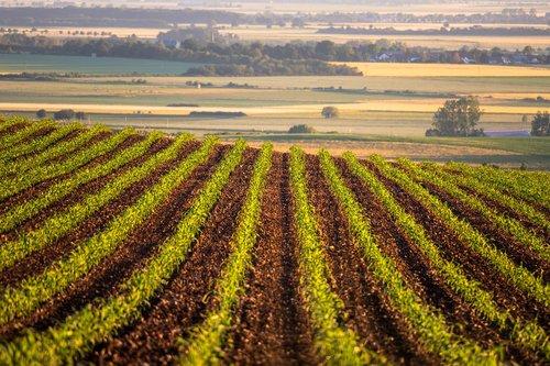 field  cornfield  arable