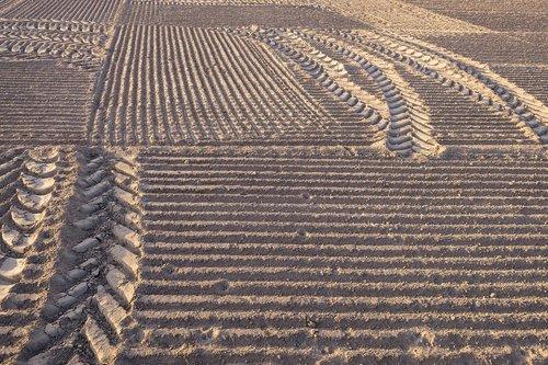 field  ridge  arable